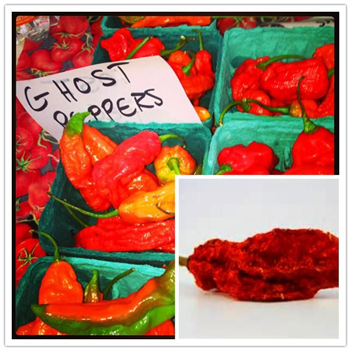 [Visit to Buy] 50 pcs/ bag India ghost pepper seeds + 200pcs purple carrot seeds as gift Hot Peter Pepper chili seeds bonsai for home & garden #Advertisement