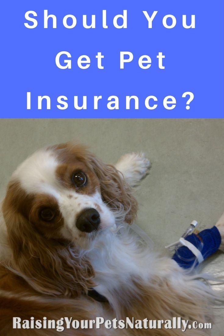Pet Insurance, Dog Insurance, Cat Insurance   Is Pet Insurance Worth It?