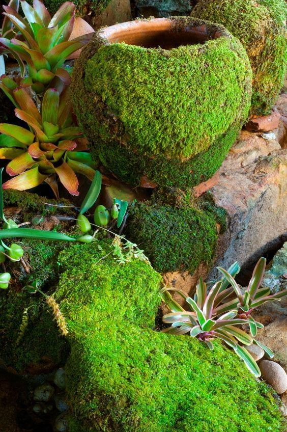 Add a little moss to pots or rocks, place 1 Part Moss 1 Part Sugar 2 Parts Beer and some live moss in a blender on slow speed just until blended, then paint mixture on terra cotta, etc...  http://www.containerwatergardens.net/how-to-grow-moss-on-pots-and-rocks/