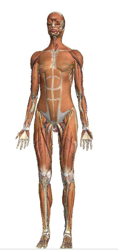 Supercoole site waarmee je de verschillende 'lagen' van het lichaam kan ontdekken door deze laag voor laag te 'pellen'. Wat zit er direct onder je botten en waar eindig je? Je zenuwstelsel?
