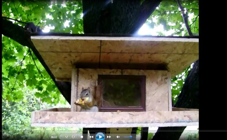Building Squirrel Proof Bird Feeder Woodworking Projects