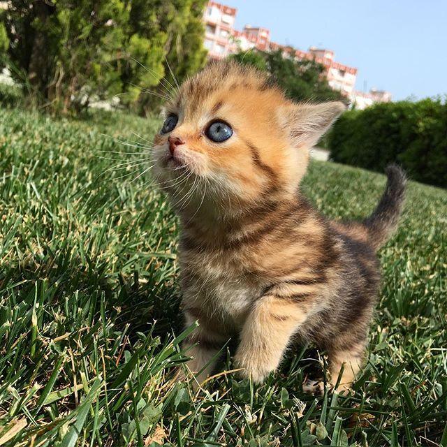 Her şey bir tarafa da sen başkasın kuzummm  #animalAddicts #meowtrip #minidost #catshuntertr #cat #gatto #thedailykitten #catsofworld #catlovers #catloversclub #catshooter #cat_features #catstocker #kitten #petvideos #cuties #fluffy #babyanimals #persian #himalayan #kitty #catlovers #neko #hemenizle #catshuntertr #cat #gatto #petsvideo