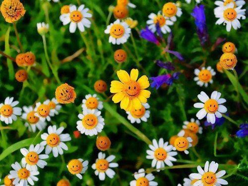 Güzel leylak sepet, Leylak Çiçeği, Lale Buketi Vazo, güzel beyaz çiçek gülümseyen çiçekler, güzel orkide, güzel güller, güzel hercai menekşe güzel ayçiçeği vadisi buketi büyük zambak - jpiros blog - Hayvanlar, Melekler, periler, Animasyonlar, Gifler, Anneler Günü fotoğraf, Donald Zola resimleri, Sağlık, İlginçlikler, Ezoterik, yazılı: Subtitled akşam, gece,: hafta, hafta sonu, altyazılı: sabah, öğleden sonra, Subtitled: yazıtlar, İkramlar, kahve, resimler içecekler, yas, hatırlama…