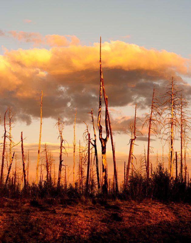 Forest Fire Sunset, Nature Photography - Fine Art Print