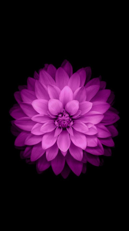 the 30 best apple flower images on pinterest | backgrounds, botany