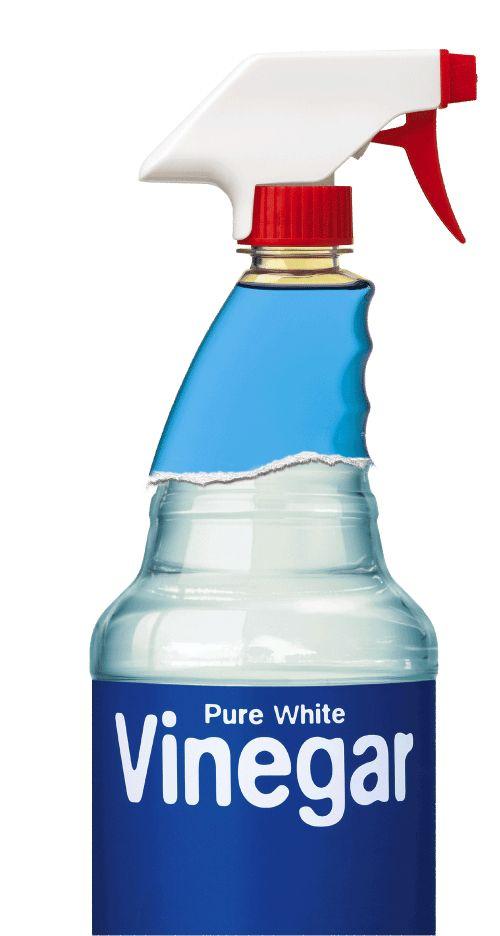 Más de 50 usos del vinagre! Además, la manera de deshacerse del olor a vinagre antes de usarlo!
