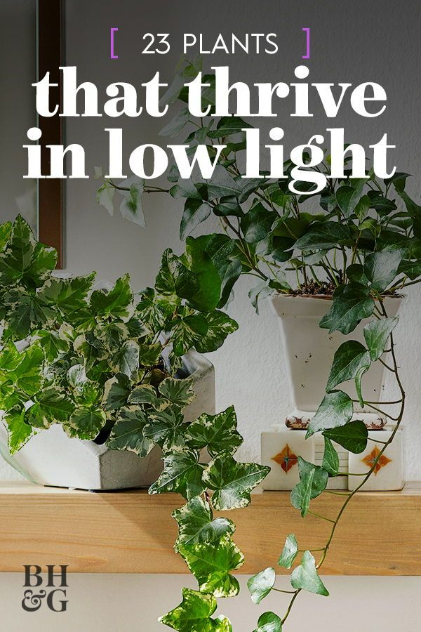 Small Trailing Indoor Plants