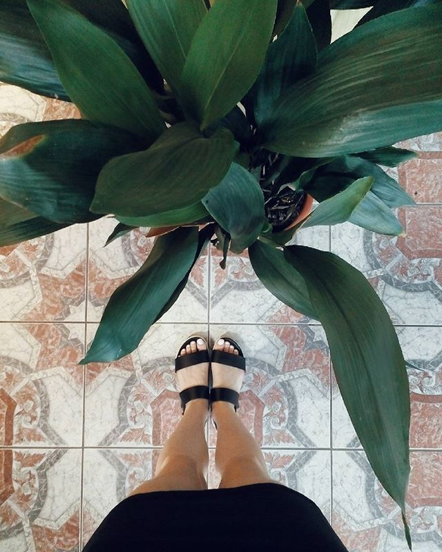 #grandmashome #plant #plantsofinstagram #aspidistra #floor #blacksandal #blackandwhitedress