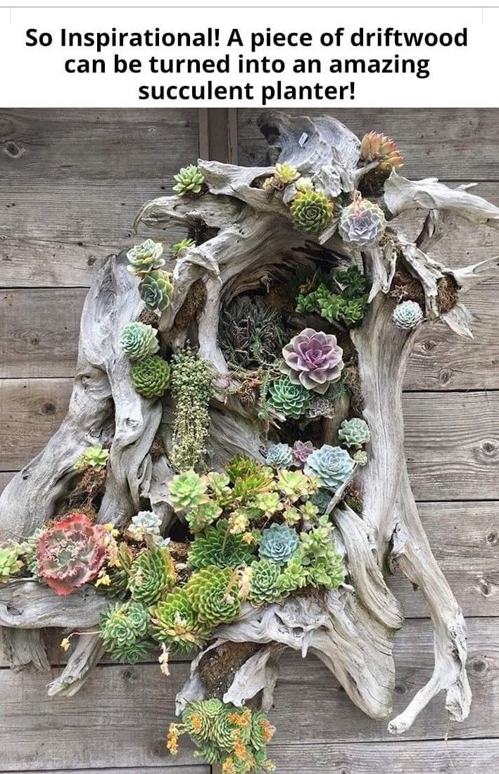 (notitle) – SUCCULENTS  vertical display for indoors