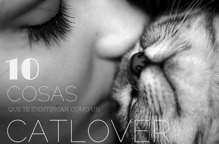 10 cosas que te identifican como un cat lover