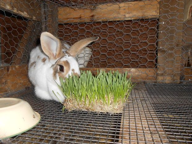 hay holder for rabbits | Two days later it is time to get busy. Once again I drain the water ...