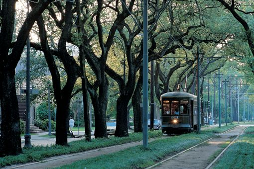 Lovely southern trees in New Orleans