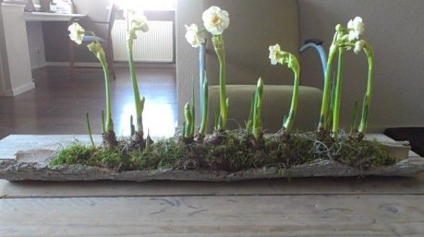 leuk voorjaar idee
