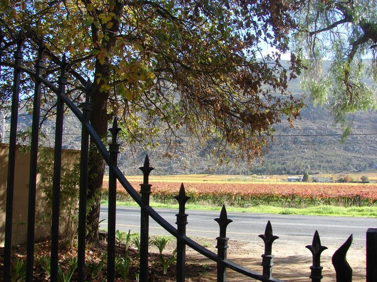 Autumn vineyards in the Western Cape, South Africa