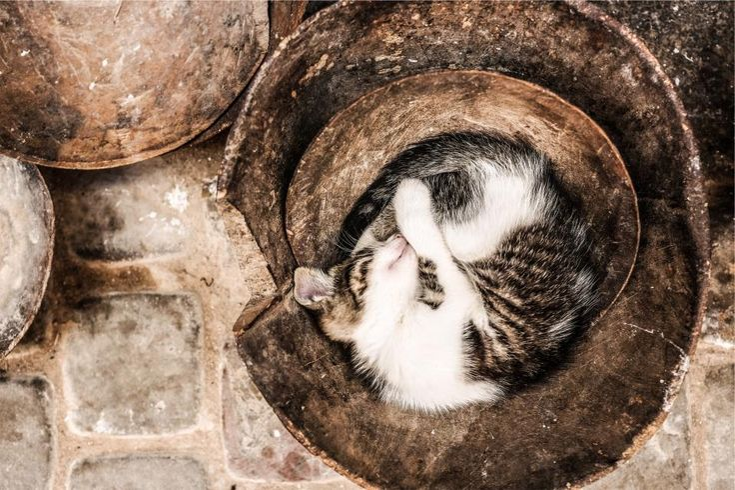 animals, sleeping, tired: