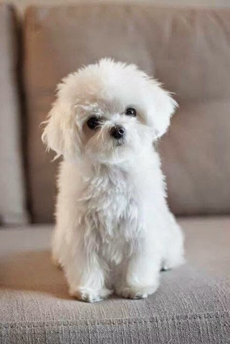 Top 10 Least Smelly Dog Breeds