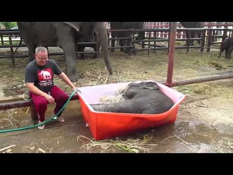 Thailand elephant camp posts video of baby elephant taking a bath - Pets & Animals - TODAY.com