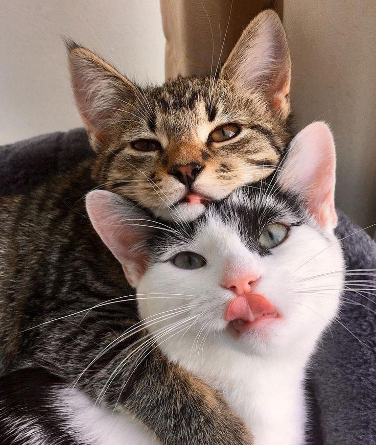 указания картинки кошки пары время своих путешествий