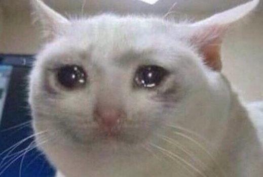 Pin De Madison Nicole Em Memes Reactions Gato Chorando