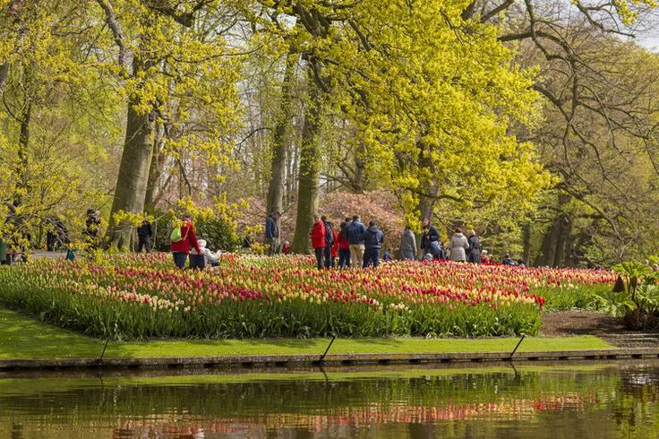 Everything You Need to Know About Amsterdam's Tulip Season