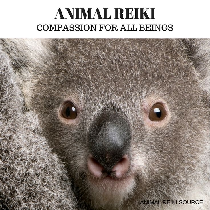 Compassion For Each Other: Animal Reiki Is Compassion