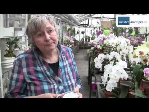 Orchideen Pflege - um Ihre Orchideen immer traumhaft schön zu blühen... - YouTube