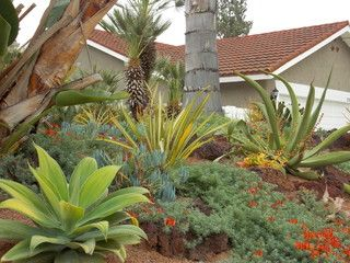 Mission Viejo 2013   Beach Style   Landscape   Orange County   By Xeristyle  | Exterior
