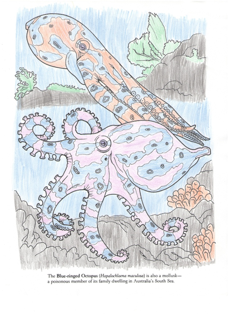 Leah E. (Under 12 division) from Coral Reef Coloring Book: http://store.doverpublications.com/0486285421.html