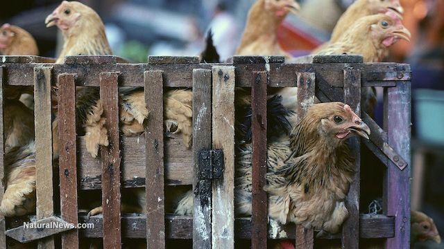 """""""Massentierhaltung besteht für mich nicht aus einzelnen, empörenden Gewaltakten an Tieren, ... """""""