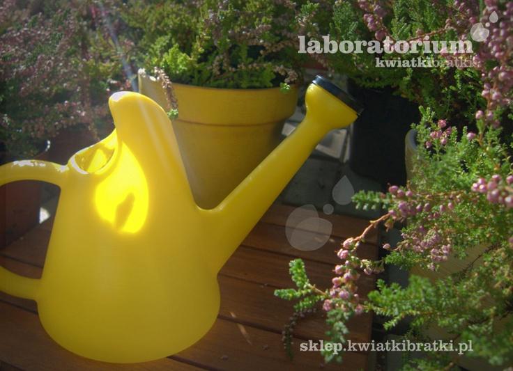 Plastikowa poręczna konewka. Rozweseli każdy miejski ogród.    https://sklep.kwiatkibratki.pl/shop-2/dla-dzieci-2/konewka-wesola-075-l/