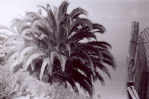 Briatico, Calabria | Palm  Tree www.ankalipowska.blogspot.com
