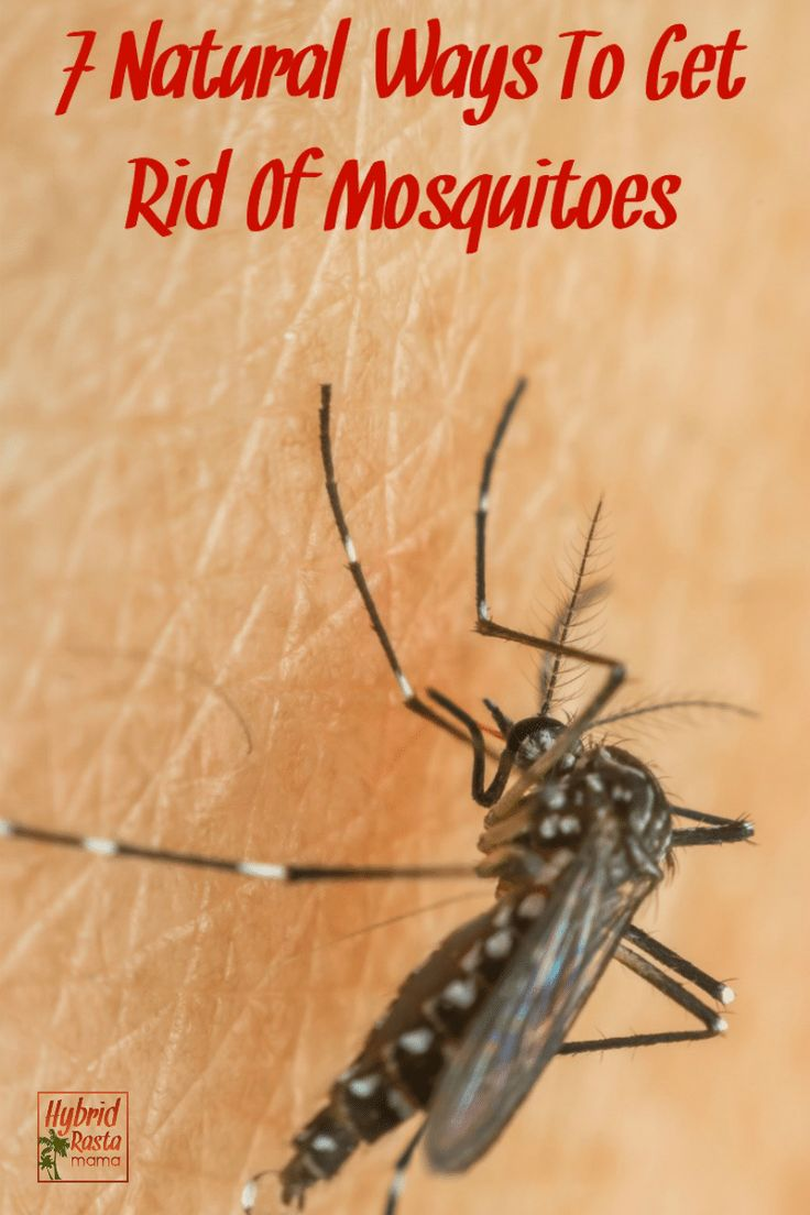7 Natural Ways To Get Rid Of Mosquitoes | Mosquito ...