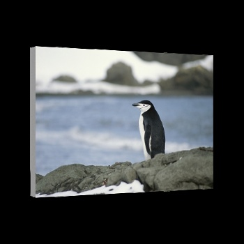 King George Island, Antarctica Canvas Art 12