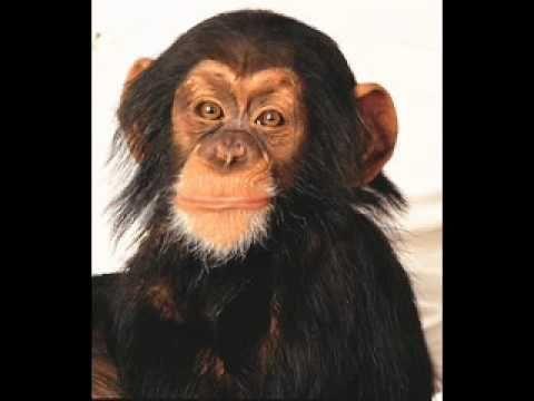 Happy Birthday Monkey Song...