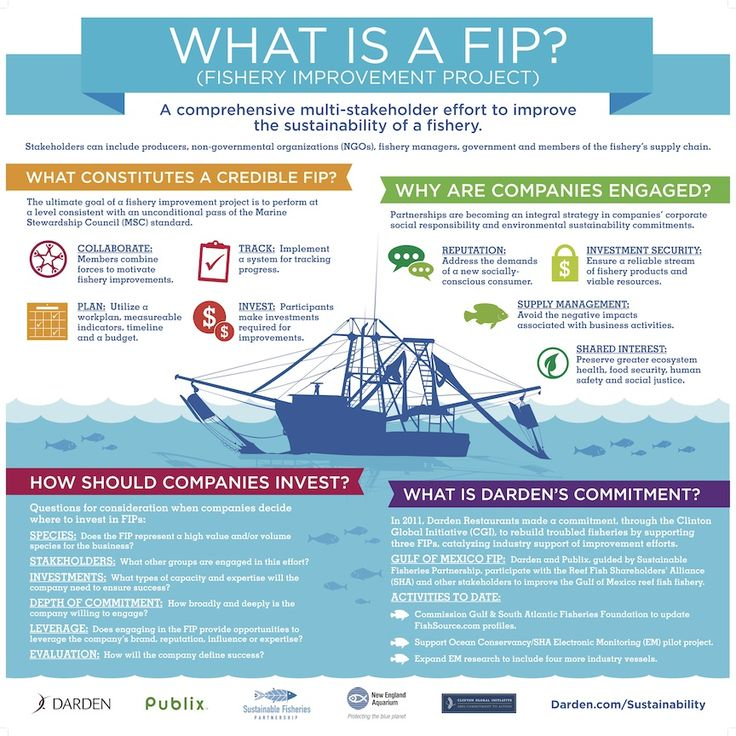 What is a FIP (Fishery Improvement Project)? Darden supports improved data collection in the Gulf of Mexico fishery