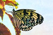 "New artwork for sale! - "" Butterfly Paper Kite Macro Insect  by PixBreak Art "" - http://ift.tt/2loO0Xr"