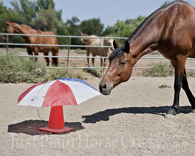 desensitizing horses | Recent Photos The Commons Getty Collection Galleries World Map App ...