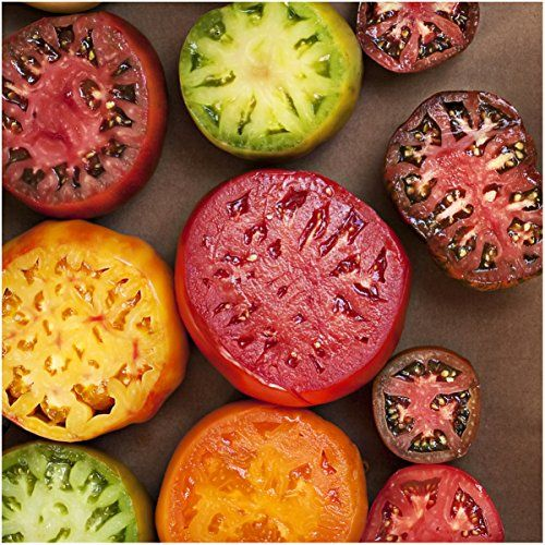 How to Save Tomato Seeds - Homestead Lady
