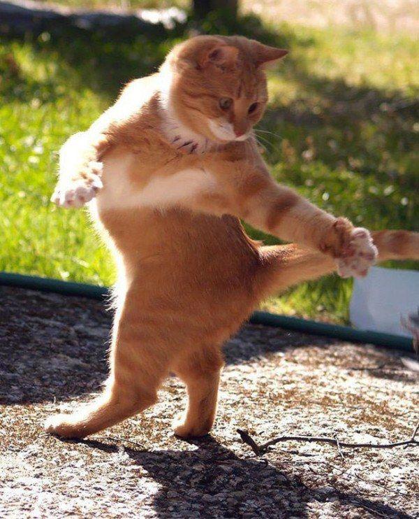 動物だって踊りたい!ダンスのようなポーズを撮られた動物たちが可愛い写真14枚