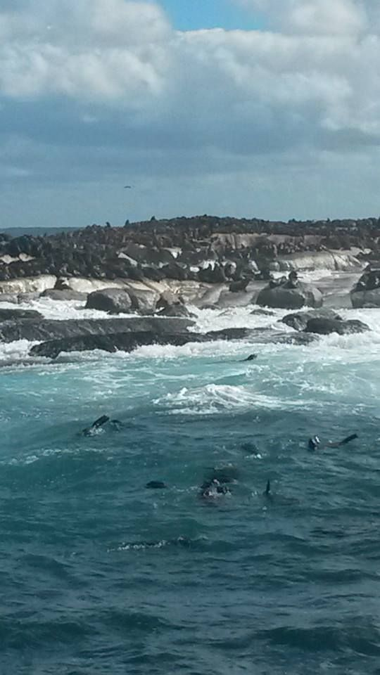 Seal Island - False Bay - Cape Town. Renown as the big white hunting ground in the Cape.
