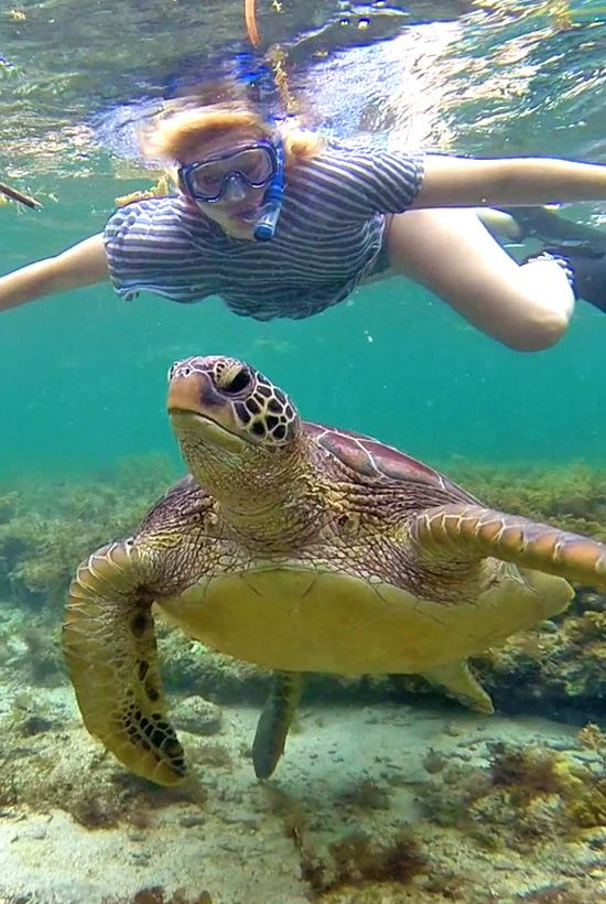 This is me. And a turtle, gasping for air. Photo taken in Apo Island, Philippines. @Just1WayTicket