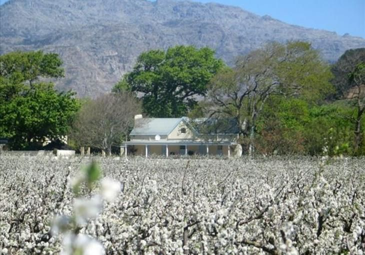 Wine & Fruit Estate With 5 Star Guesthouse ~ Franschhoek, Cape Town | Knight Frank