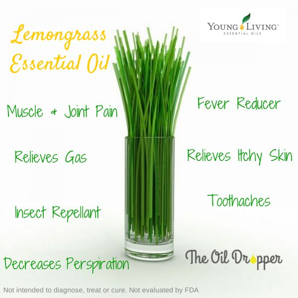 how to make lemongrass essential oil at home