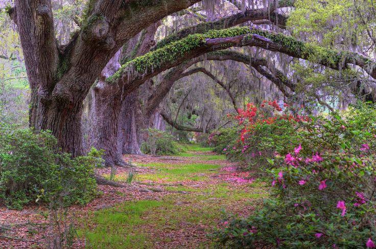 #oaktree #azalea dunes properties www.dunesproperties.com