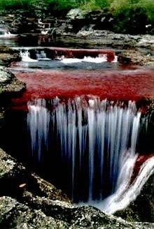 cano cristales river of 5 colors