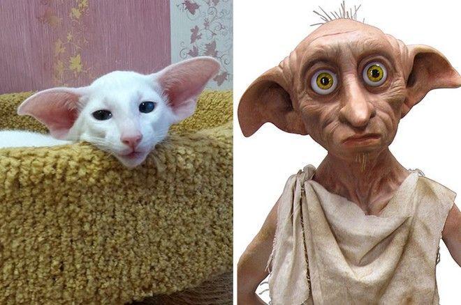 Γάτες, που σίγουρα κάτι σας θυμίζουν - NEWS247