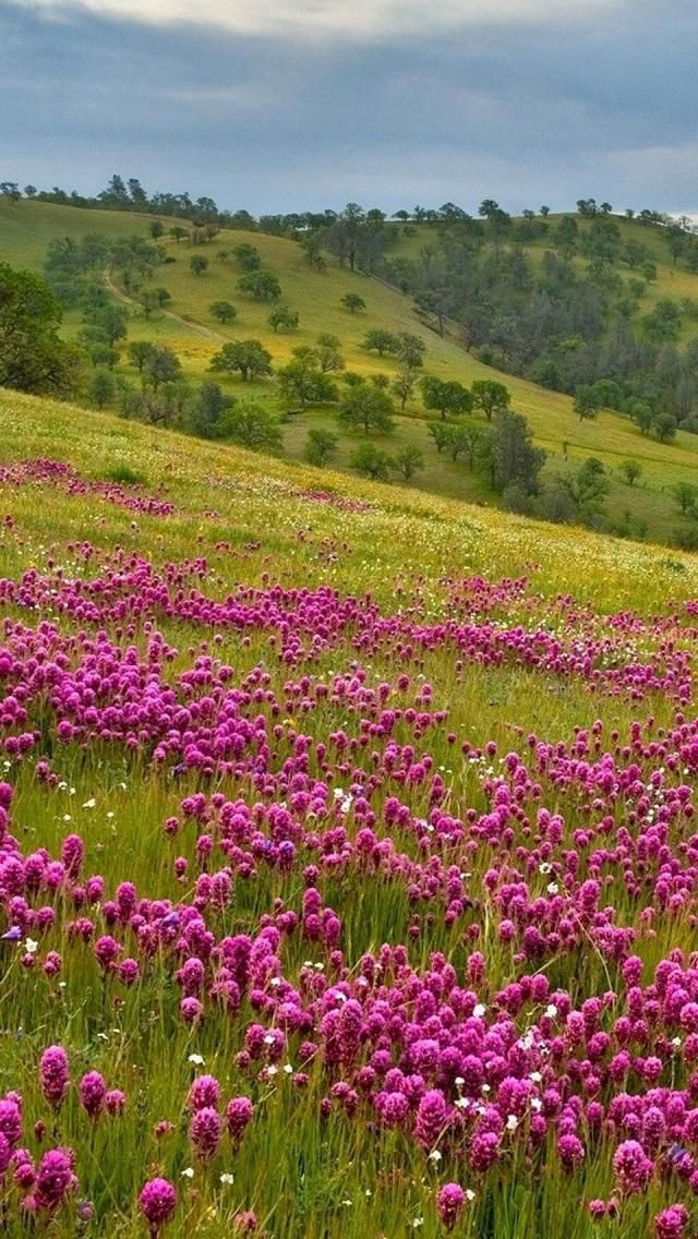 Flowers, Meadow, Hills, Natural, inspiration for your garden? http://guyshilllandscaping.ca/