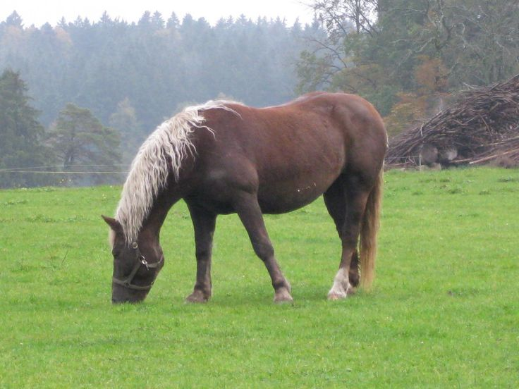 Liver Chestnut Horse With Flaxen Mane And Tail - photo#3