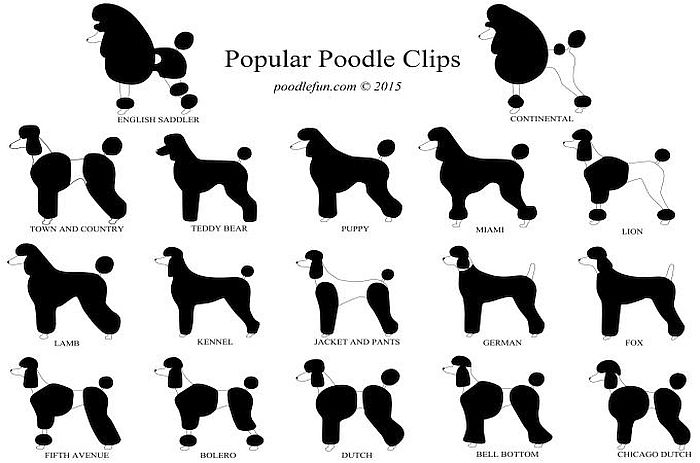 5 Types Of Poodles All Kinds Of Fluffy Sizes Shapes And Colors Poodle Haircut Dog Grooming Styles Dog Grooming