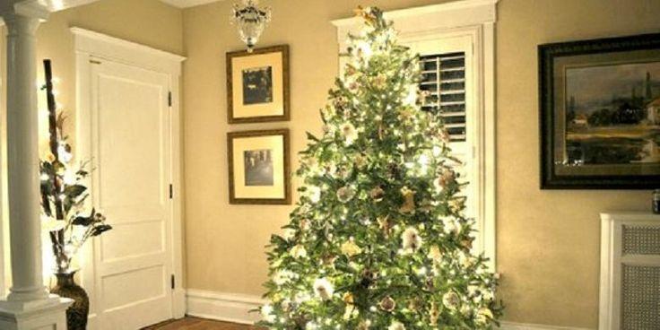 Begini Cara Merawat Pohon Natal di dalam Rumah | 10/12/2015 | KOMPAS.com - Dekorasi Natal identik dengan pohon natal di dalam rumah. Namun, sebagian orang merasa dekorasi pohon Natal haruslah berasal dari pohon sesungguhnya. Tak peduli seberapa nyata terlihat, pohon ... http://propertidata.com/berita/begini-cara-merawat-pohon-natal-di-dalam-rumah/ #properti #rumah #natal